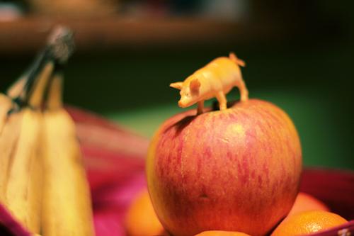 piggy apple