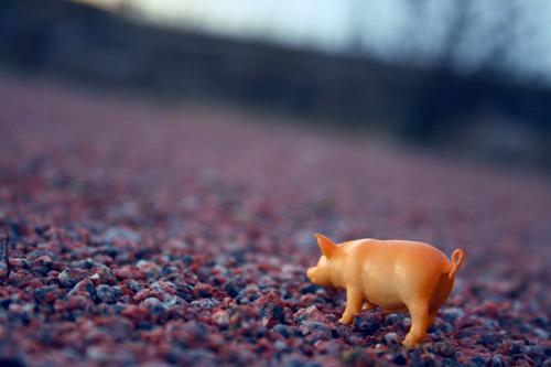 pig gravel