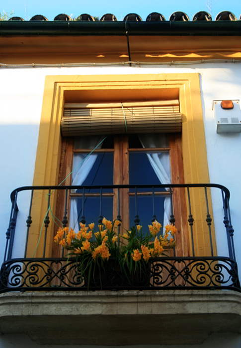 yellow flowers yellow window