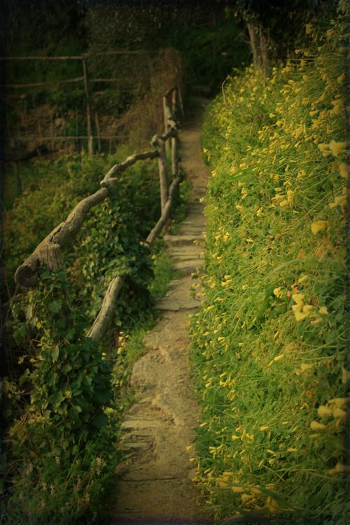 path, cinque terre