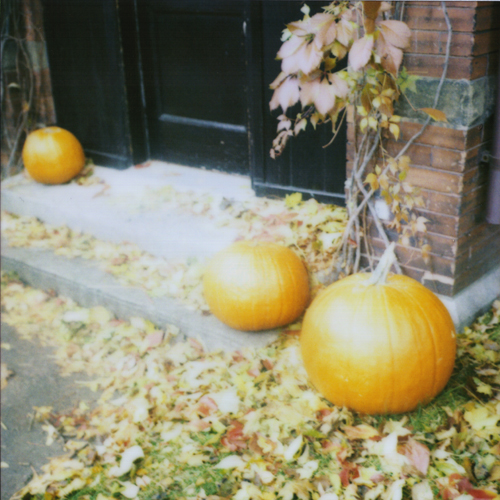pumpkin 500